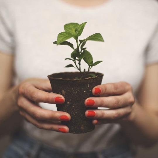 Greens. Домашние растения в дизайне интерьера.