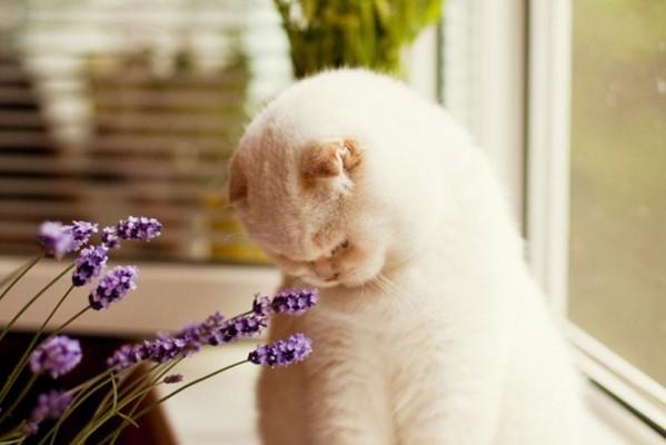 pet-safe-plants-cat