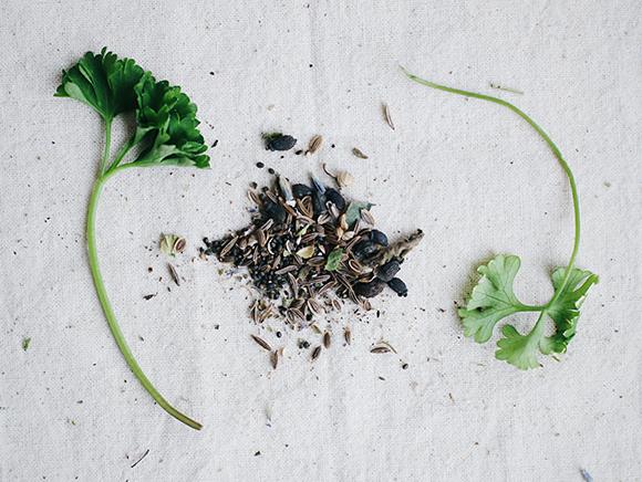 Домашний огород. Пряные травы на подоконнике.