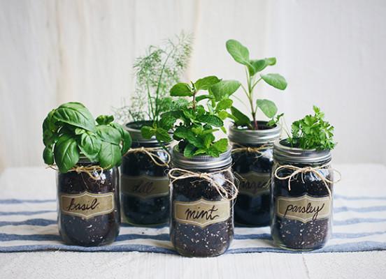 Огород на кухне: пряные травы как элемент декора