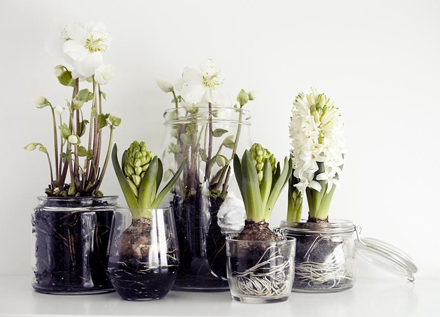 цветы в стекле, декор, гиацинты в стекле, интерьер
