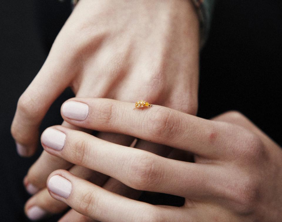 Yellow Ladybug, божья коровка