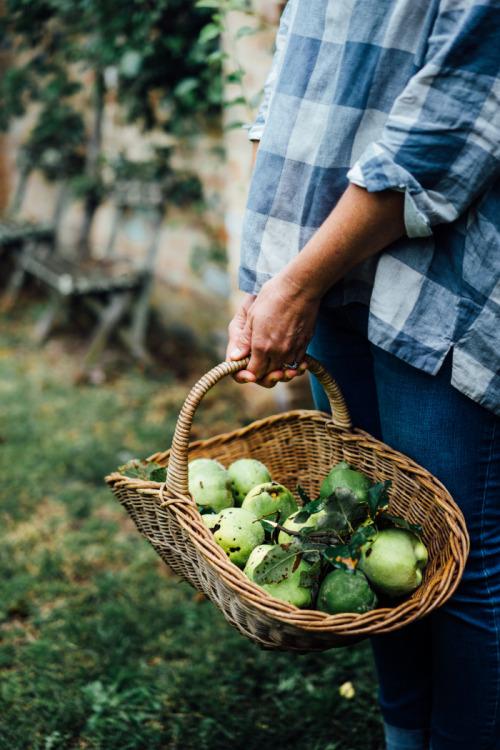 greyskymorning, apples, яблоки, корзина