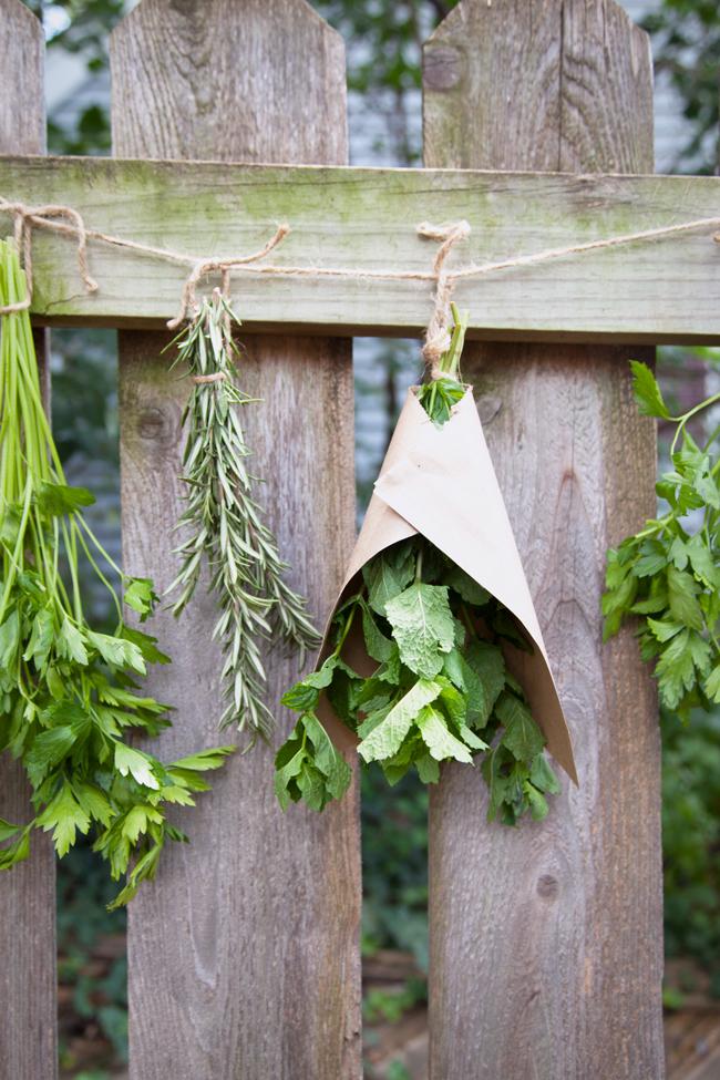 как правильно сушить травы, чай, специи