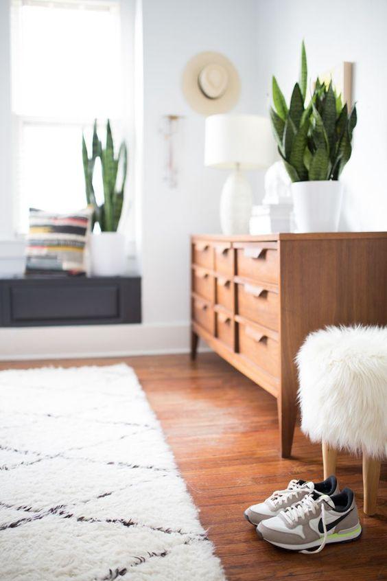 Домашнее растение: как правильно выбрать место?